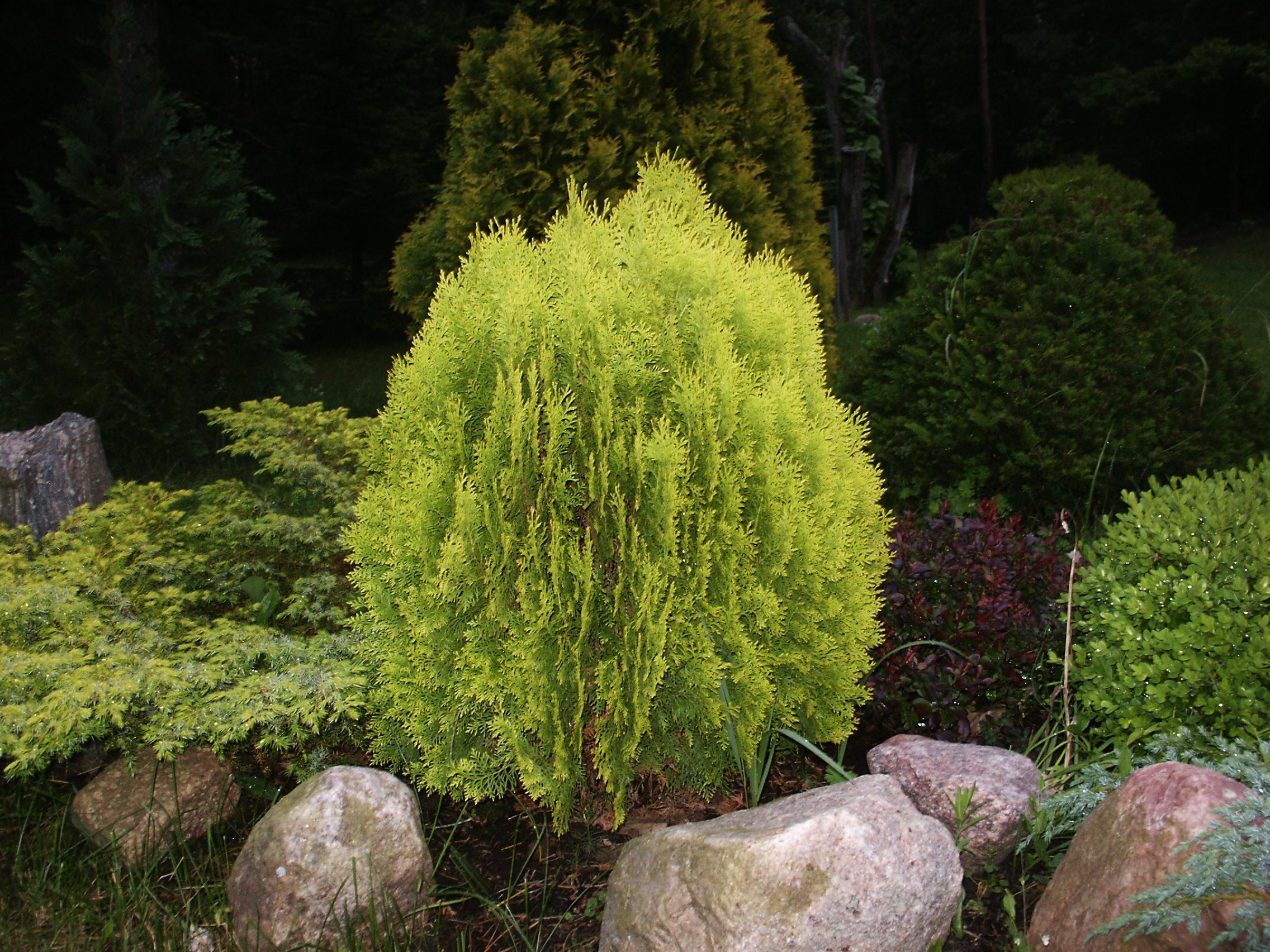 Minimalistinis sodo stilius. Kaip jį sukurti?