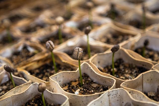 Daržo paruošimas ir priežiūra pavasarį. Darbai balandį ir gegužę